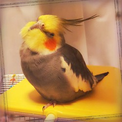 鳥フォトコンテスト「ポポタン」さん