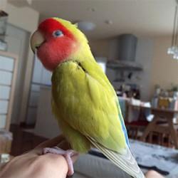 鳥フォトコンテスト「マーチ」さん