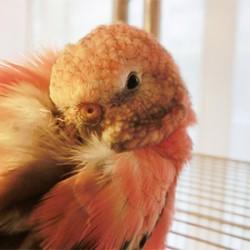 鳥フォトコンテスト「桜」さん