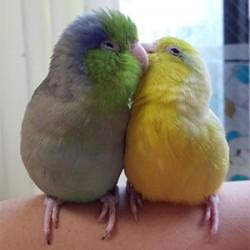 鳥フォトコンテスト「マル・メル」さん