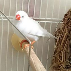 鳥フォトコンテスト「ジャック」さん