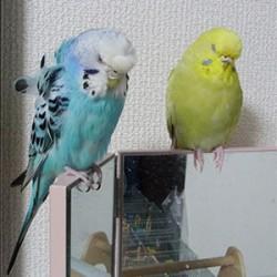 鳥フォトコンテスト「さりぃ・じゅりぃ」さん