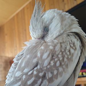 鳥フォトコンテスト「しぃ」さん