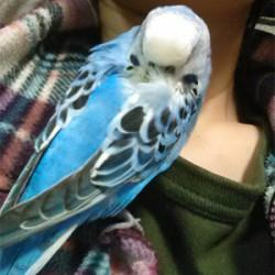 鳥フォトコンテスト「りお」さん