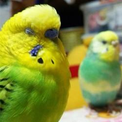 鳥フォトコンテスト「エコル」さん