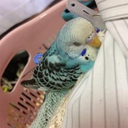 鳥フォトコンテスト「あんこ」さん