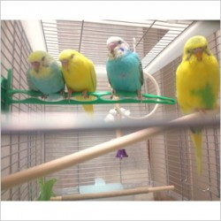鳥フォトコンテスト「ぷー・ぴー・ぺー・ぱー」さん