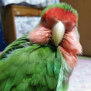鳥フォトコンテスト「ギー」さん