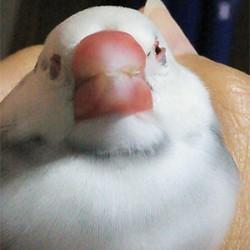鳥フォトコンテスト「ハチ」さん