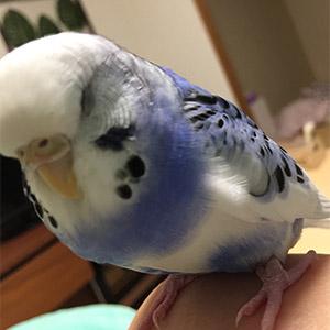 鳥フォトコンテスト「やまと」さん