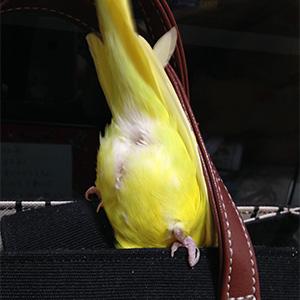 鳥フォトコンテスト「キューちゃん」さん