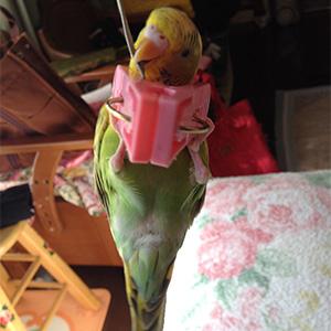 鳥フォトコンテスト「ルピ」さん