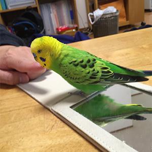 鳥フォトコンテスト「スコスー」さん