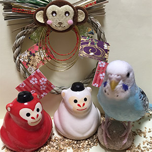 鳥フォトコンテスト「ポコタ」さん