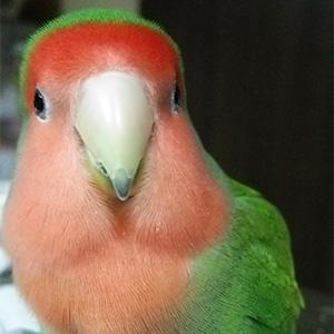 鳥フォトコンテスト「よもぎ」さん