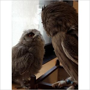 鳥フォトコンテスト「ふく子」さん