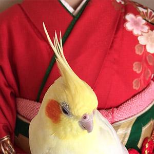 鳥フォトコンテスト「パピ」さん