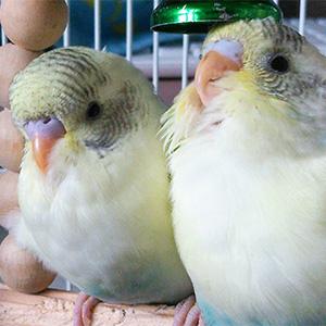 鳥フォトコンテスト「にーちゃん・さんちゃん」さん