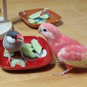 鳥フォトコンテスト「りるふぃ・あいりぃ」さん