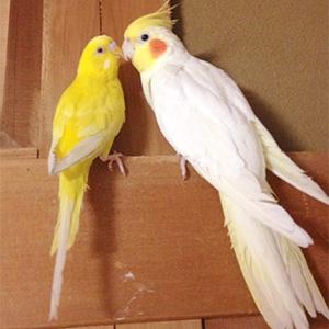 鳥フォトコンテスト「キキ・まる」さん