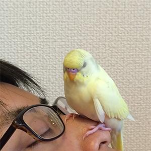 鳥フォトコンテスト「ぽこちゃん」さん