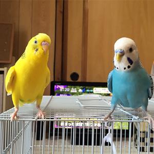 鳥フォトコンテスト「ピーコ・はーる」さん