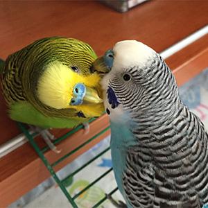 鳥フォトコンテスト「アオ・チビ」さん