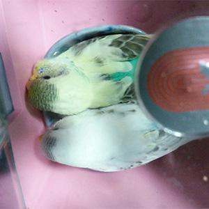 鳥フォトコンテスト「いっちゃん・さんちゃん」さん