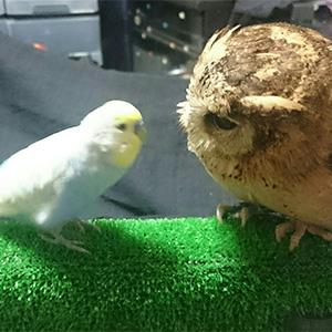 鳥フォトコンテスト「レン(左)・コノハ(右)」さん