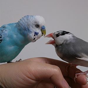 鳥フォトコンテスト「ミント・サン」さん