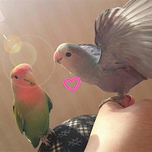 鳥フォトコンテスト「ねむ・くぅ」さん