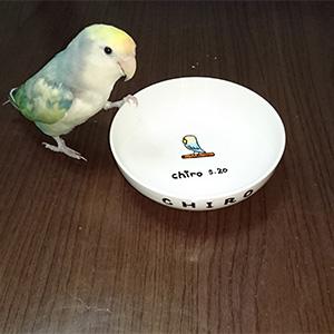 鳥フォトコンテスト「チロちゃん」さん