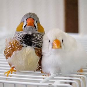鳥フォトコンテスト「志村けん坊(左)・あずさ3号(右)」さん