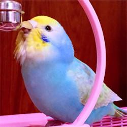 鳥フォトコンテスト「おはぎやま親方」さん