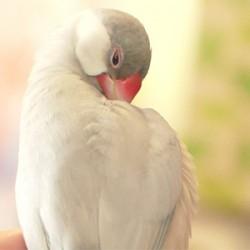 鳥フォトコンテスト「ネムイちゃん」さん