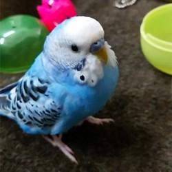 鳥フォトコンテスト「ハッピー」さん
