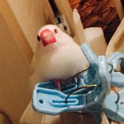 鳥フォトコンテスト「さっちゃん」さん