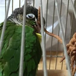 鳥フォトコンテスト「Popo」さん