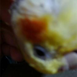 鳥フォトコンテスト「すーちゃん」さん