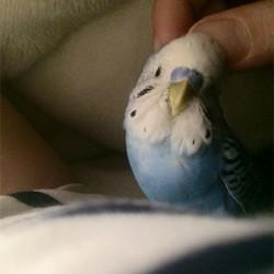 鳥フォトコンテスト「大葉」さん