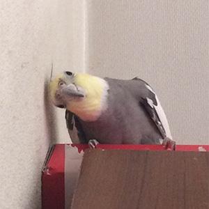 鳥フォトコンテスト「りゅう」さん