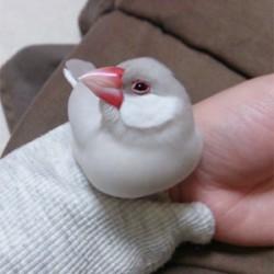 鳥フォトコンテスト「ぎん」さん
