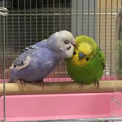 鳥フォトコンテスト「ジロー・くれ」さん