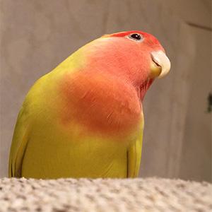 鳥フォトコンテスト「さくら」さん