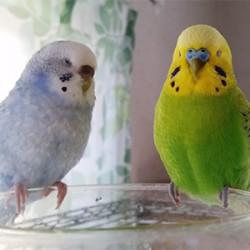 鳥フォトコンテスト「マンブル・もも」さん