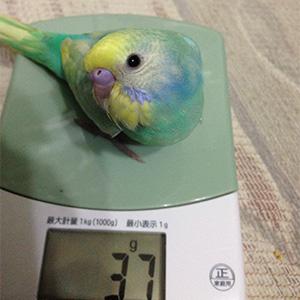 鳥フォトコンテスト「シンシン」さん