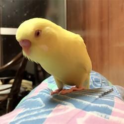 鳥フォトコンテスト「るち」さん