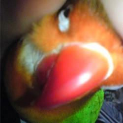 鳥フォトコンテスト「るり」さん