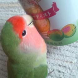鳥フォトコンテスト「きなこ」さん