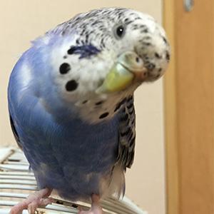 鳥フォトコンテスト「ヨヨ」さん